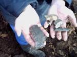 puma úspěšně zlikvidována na místě nálezu